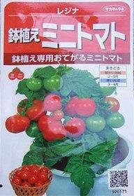 tomato-tanemaki25.JPG