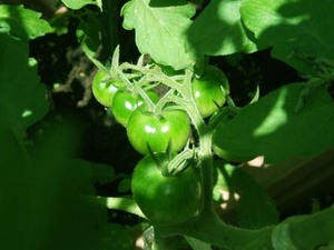 肥料の働き|育てる植物にあわせて与えます