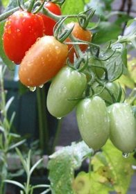 夏野菜苗 植え付け時期