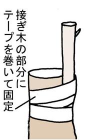 tugikiB.jpg