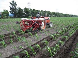 追肥・中耕・土寄せ|このステップが野菜類を元気に